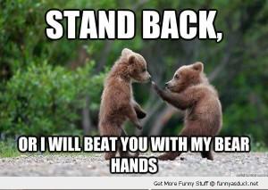 boxing bears